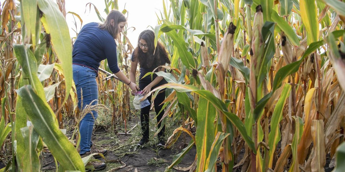 Two women collect and bag a soil sample in a corn field