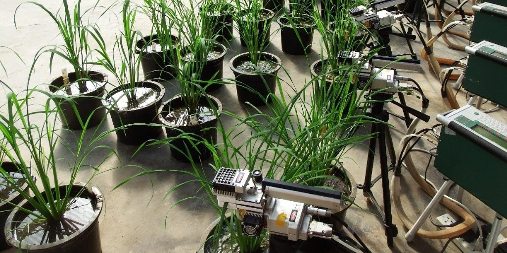 Instruments measuring rice photosynthesis