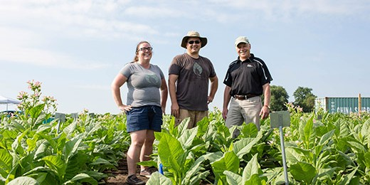 Researchers standing in a field of plants