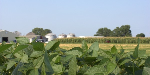 soybean and corn with grain bins in the distance