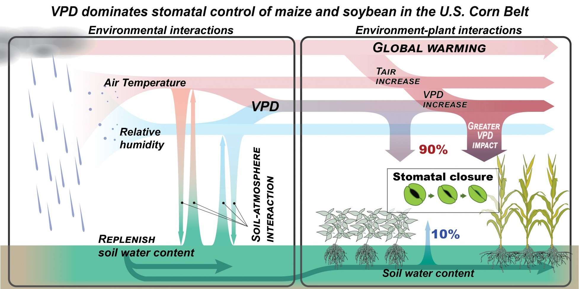 schematic showing the effects of soil water and dry air on crops