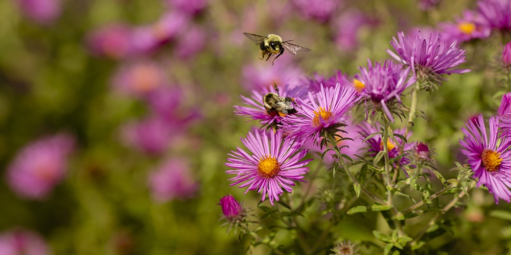 wildflowers and bees