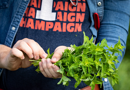 Student holding bundle of plants
