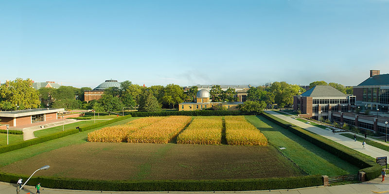 Morrow plots in the early fall, 2016, with corn in a few plots. IGB, undergrad library, and observatory also visible.