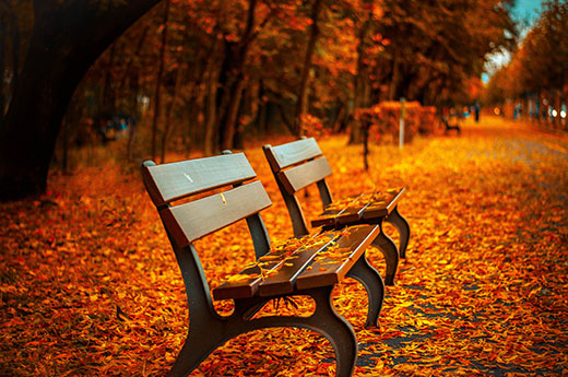 Benches with fall leaves all around