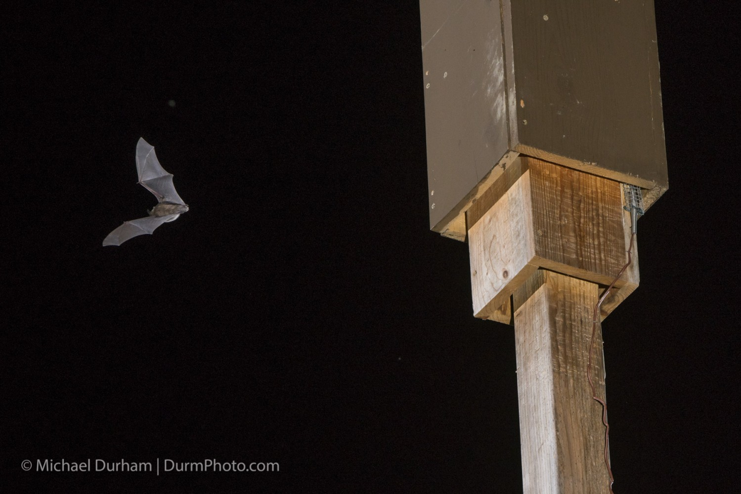 Bats are better off in tall, four-sided bat boxes than many other designs on the market. Photo by Michael Durham.