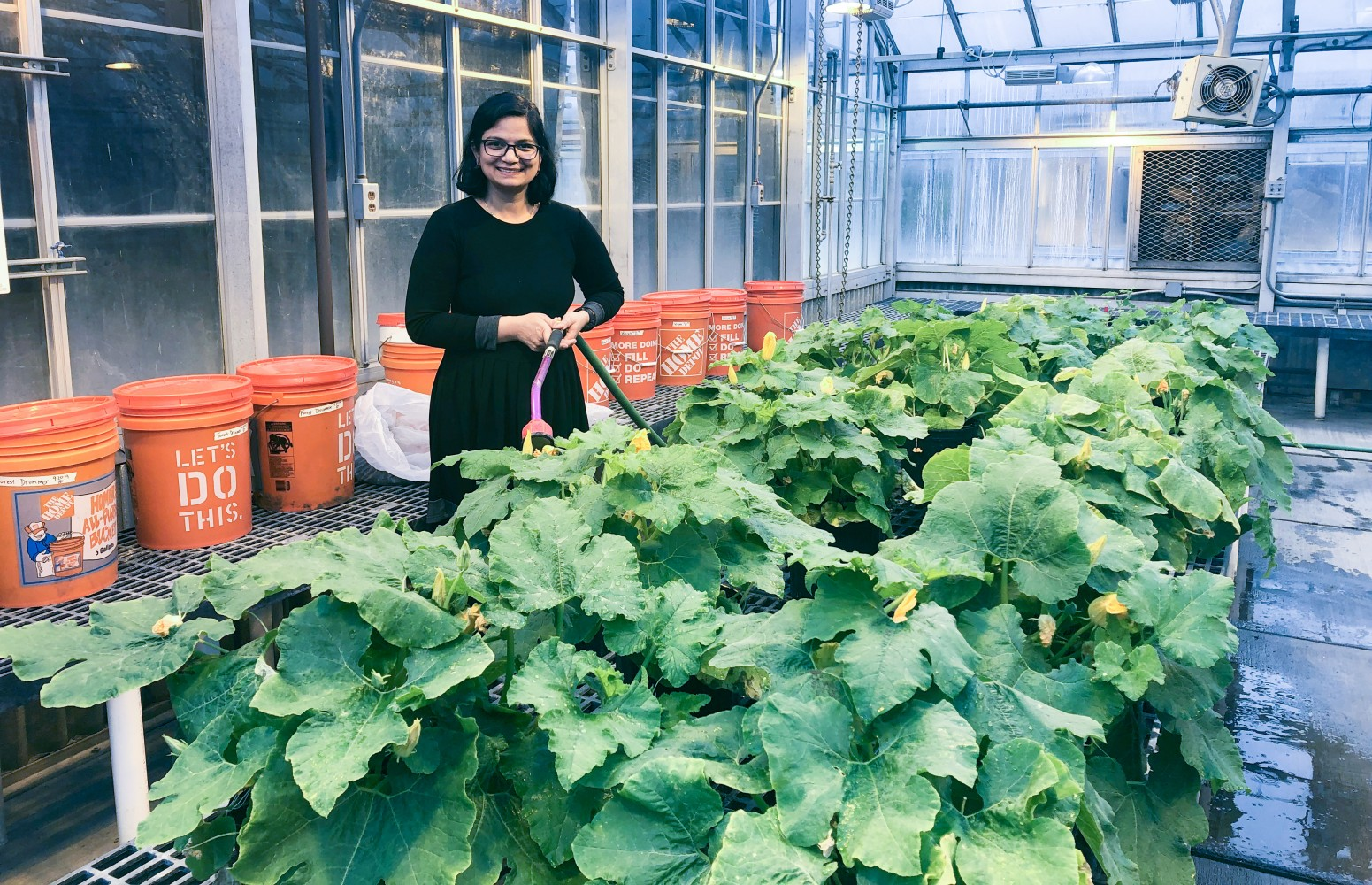 Rikky Rai in the greenhouse with pumpkin plants