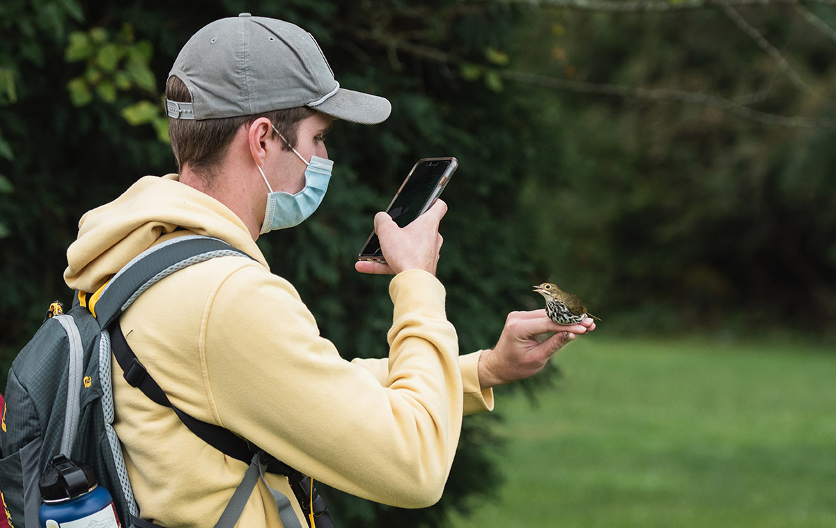 student photographs bird with smartphone