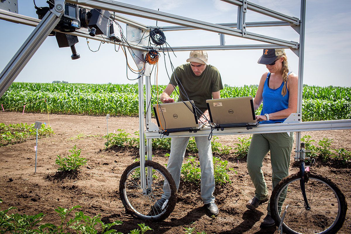 University of Illinois Research Technician Evan Dracup (left) and Postdoctoral Researcher Katherine Meacham-Hensold (right) screen entire research plots for high-yielding photosynthesis traits.