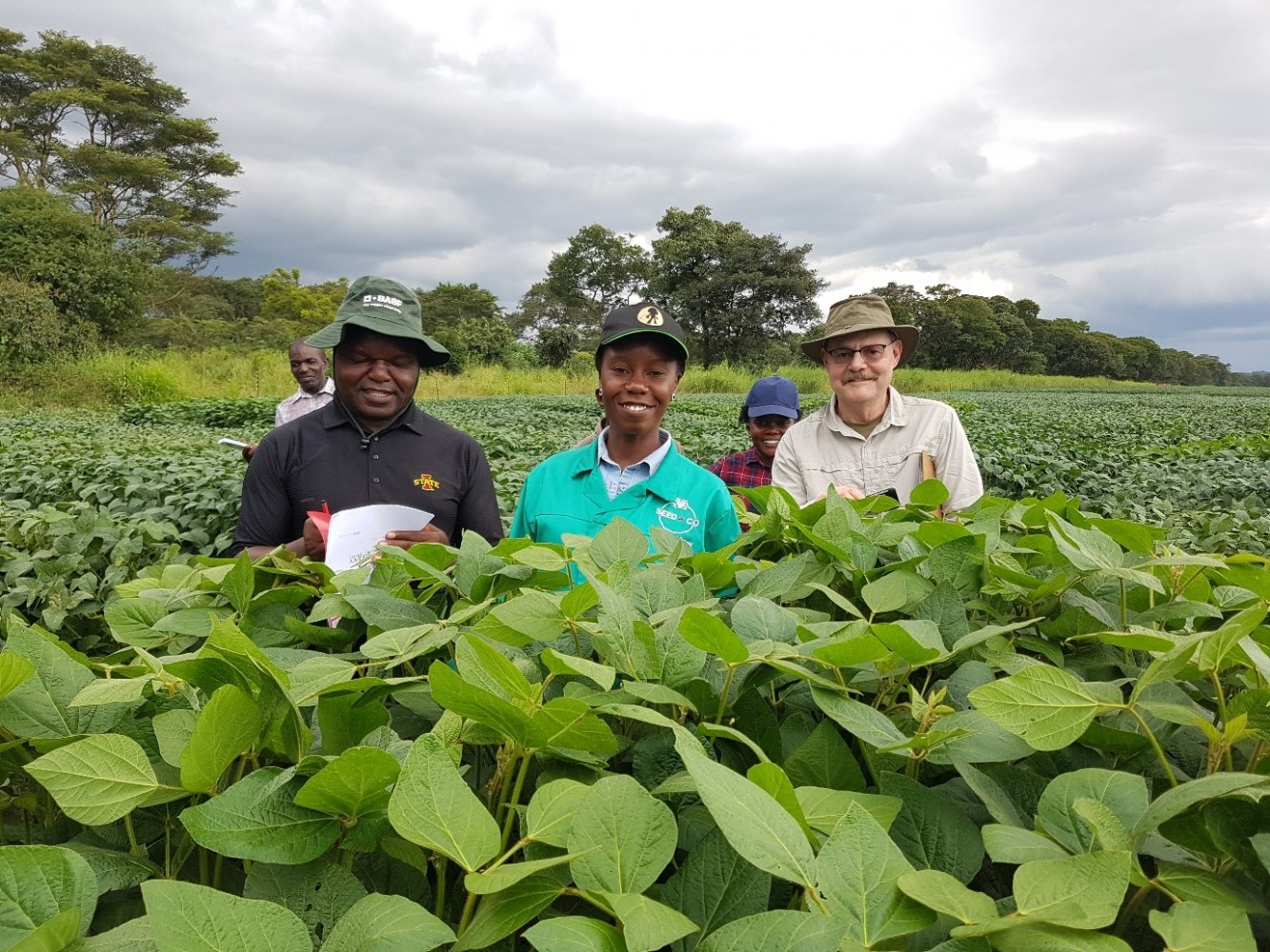 Glen Hartman (right) pictured with Pan-African Soybean Variety Trial collaborators with the International Institute of Tropical Agriculture (IITA) at a field site in Zambia in March 2019.