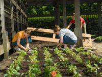 Students Planting Begonias at the Arboretum