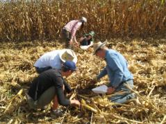 Students and faculty check for corn loss in Brazil