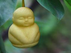 pear shaped like a Buddha
