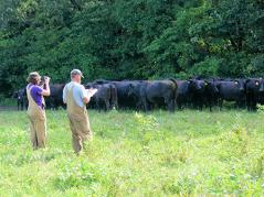 students with beef cattle