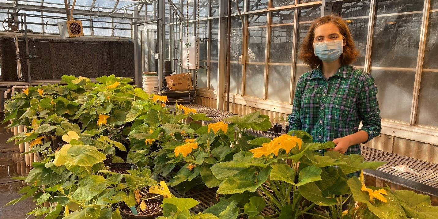 Student in greenhouse with pumpkin plants