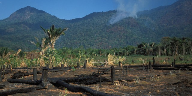 tropical forest destruction